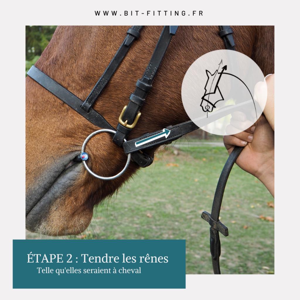 Étape 2 : Prenez du contact sur vos rênes, soit grâce à une aide extérieure, soit en prenant vos deux rênes dans une main. Important : les deux rênes doivent être tendues, le plus symétriquement possible !